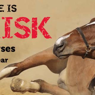 Colic Prone Horses