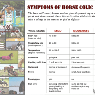 Flier about Symptoms of Horse Colic