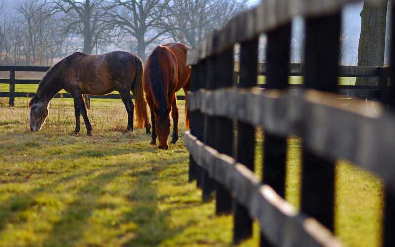 PSSM Horses in a pasture next to a fence