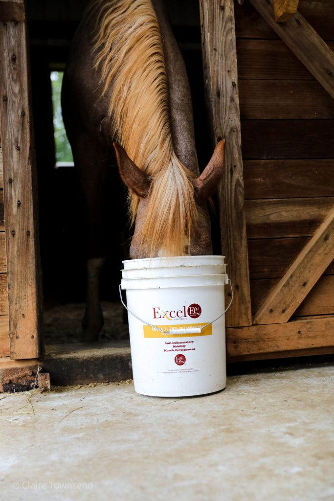 Pony Eating out of Bucket