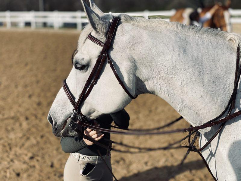 FEI Safe White Horse