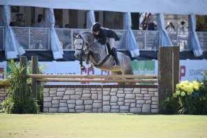 Partners English Rider on Grey Horse
