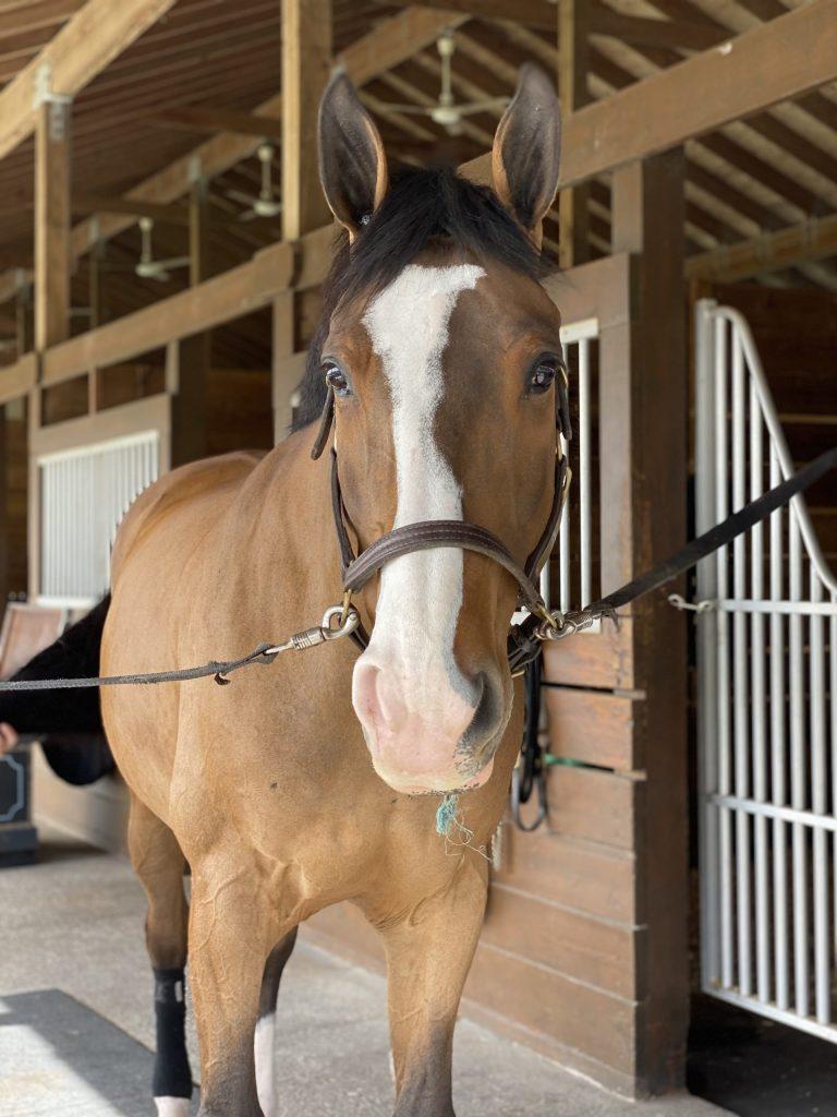 Horse boarding 3