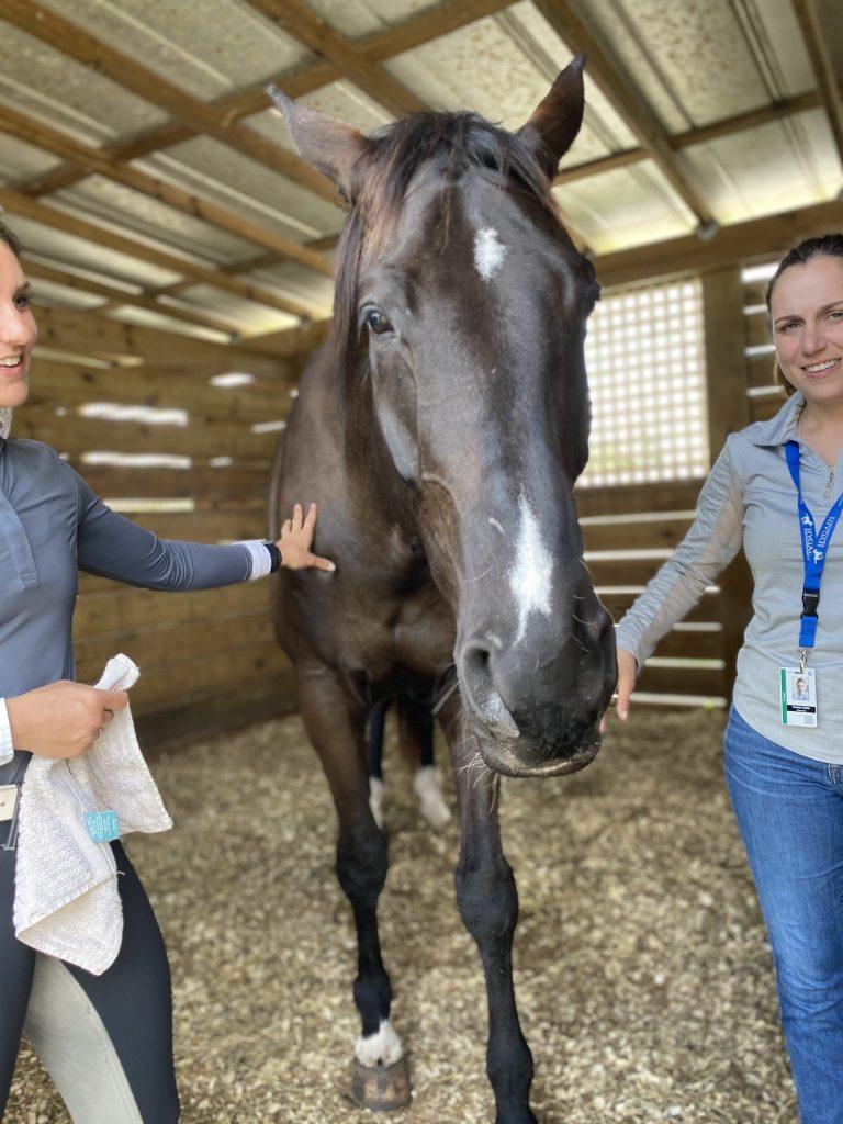 Dehydration in Horses
