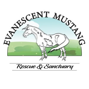 Evanescent Mustang Rescue