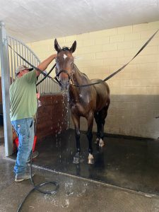 Hosing Horse