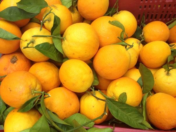 Lemons, Inca 7374 Copyright Shelagh Donnelly