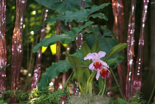 3669 Fairchild Botanical 3743 Copyright Shelagh Donnelly