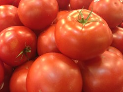 Tomatoes 9693 Copyright Shelagh Donnelly