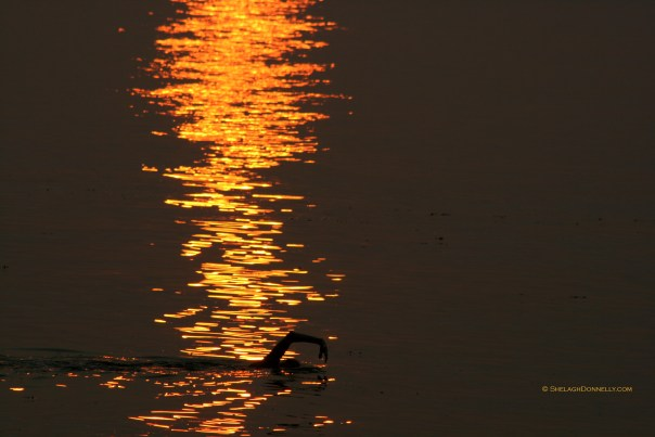 Spanish Banks Sunset Swim 5390 Copyright Shelagh Donnelly