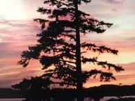 West Coast Tree - IMG_4811