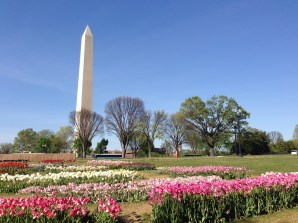 Washington Monument in Spring Copyright Shelagh Donnelly