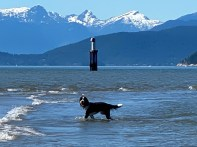 Dog-Day-at-Spanish-Banks-202106-1919-copyright-Shelagh-Donnelly