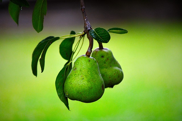 fruit-1780918_640