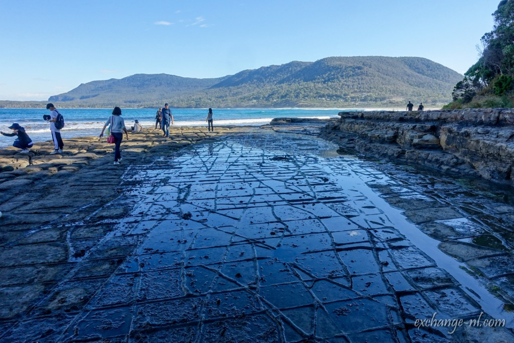 塔斯曼尼亞棋盤道 Tessellated Pavement, Tasmania