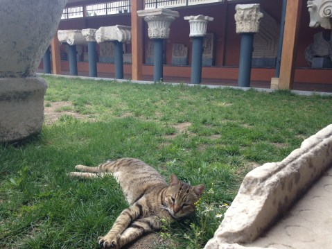 Cat enjoying the Ephesus Museum :)