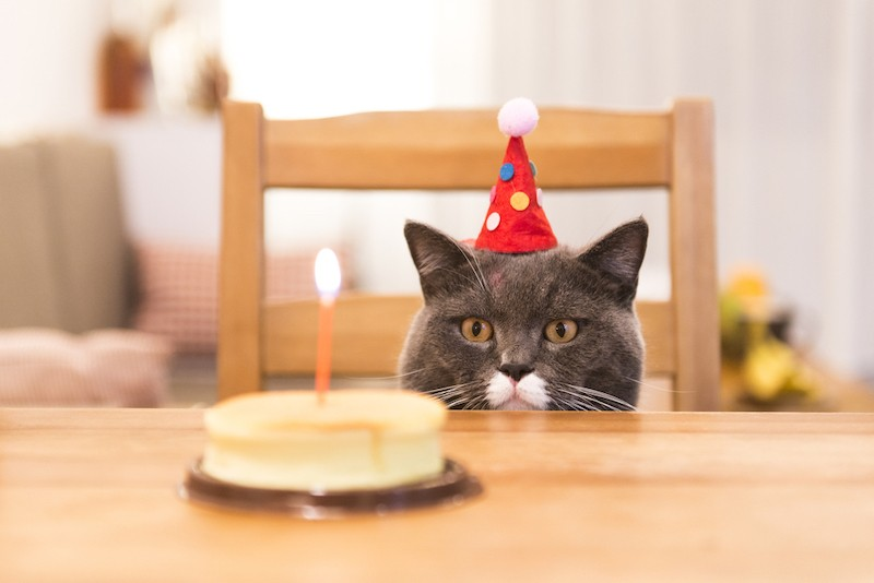 40 Happy Birthday Cat Memes Funny Jokes To Celebrate Excited Cats