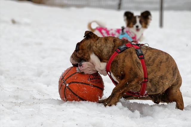 バスケットボール遊び