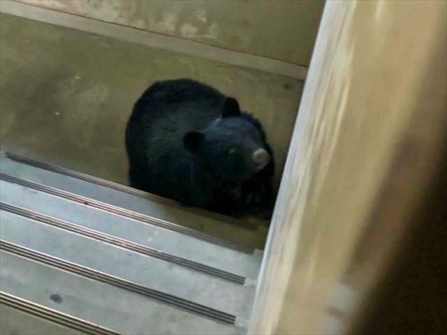 住宅街に熊出没注意【新潟県】
