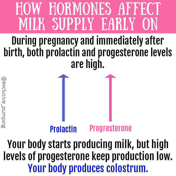 How Hormones Affect Milk Supply Early On | During pregnancy and immediately after birth, both prolactin and progesterone levels are high. Your body starts producing milk, but high levels of progesterone keep production low. Your body produces colostrum. blue arrow with label prolactin and pink arrow with label progesterone, both same height.