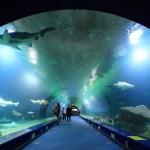 Oceanografic Haie