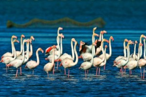 Excursiones desde Castellón a el Delta del Ebro