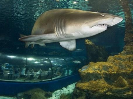 Dormir con tiburones en L'Aquàrium, para niños de 8 a 12 años