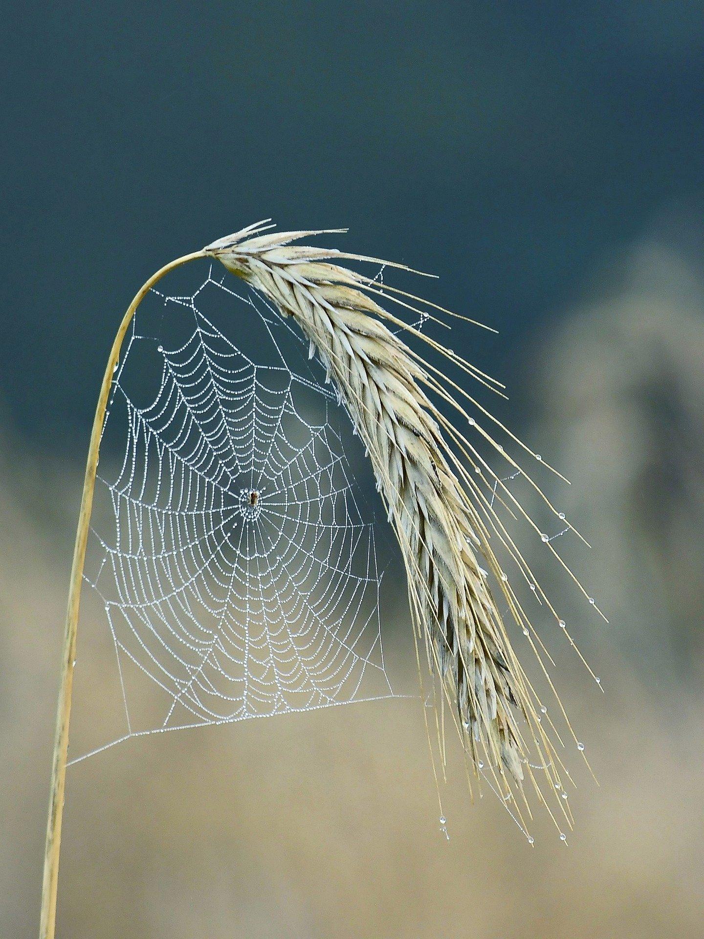 cobweb-5547626_1920