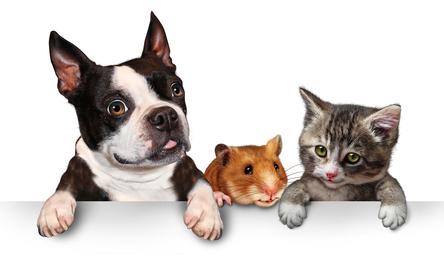 coto de caza movers pets tips