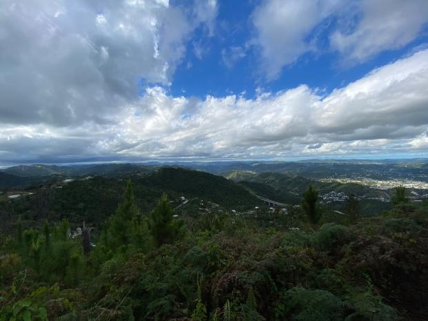 The Pine Trees Forest: The view