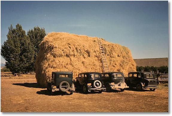 Hay stack and automobiles of peach pickers, Delta County, Colorado, 1940