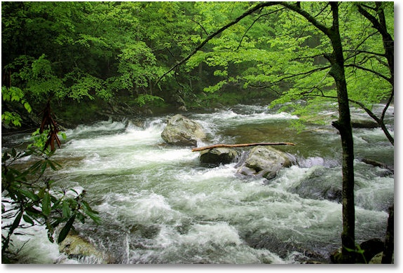 little river, great smoky mountains national park