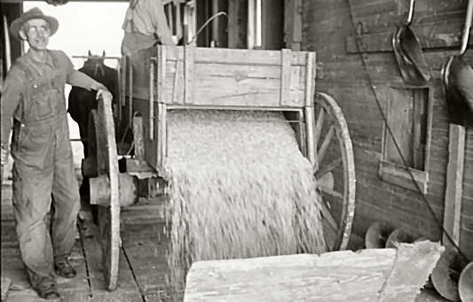 Corn being dumped into shaft of grain elevator, near Gibson City, Illinois - Carl Mydans, May 1936; Lib. of Congress—Farm Security Administration - Office of War Information Collection