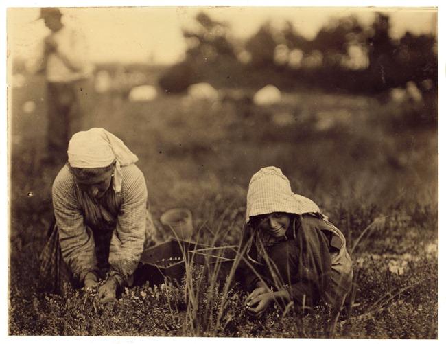 Millie Cornaro, Philadelphia, 10 years old. Cranberry Picker. September 1910