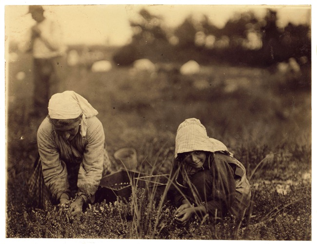 Millie Cornaro, Philadelphia, 10 years old. Cranberry Picker. September 1910