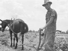 Son of sharecropper family at work
