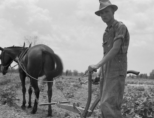 Eyes of the Great Depression - 007; Oldest son of sharecropper family at work in the cotton near Chesnee, South Carolina 1937 June; photo by Dorothea Lange