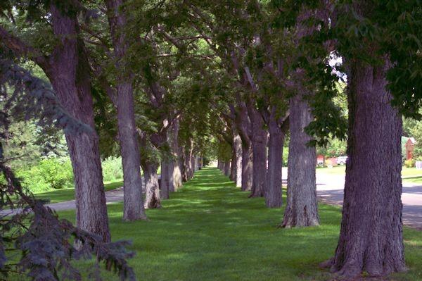 Alliance, Nebraska - city park, August 2014