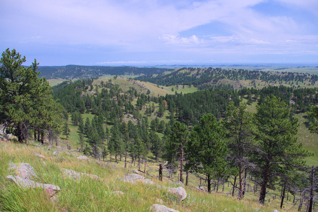 Rankin Ridge trail, Wind Cave National Park, South Dakota, August 8, 2014