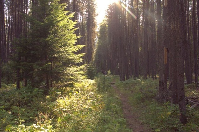 Trail through wood to  Apgar Village, Glacier National Park, Montana, August 25, 2014