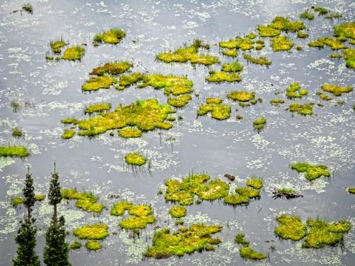 Pond, Algpnquin Provincial Park