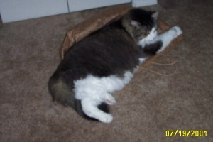 my 25lb cat that currently lives with my mom<