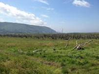 A Walk Through The West Porlock Marshes, part 2 5