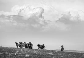 2108-julia-amies-green-exmoor-pony-herd-on-the-move-under-big-skies