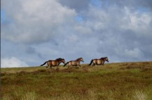 devonlinda-running-free-on-exmoor