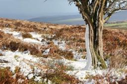 219-debbie-howe-a-sprinkling-of-snow-on-dunkery