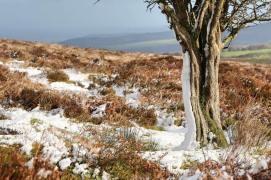 219-debbie-howe-a-sprinkling-of-snow-on-dunkery