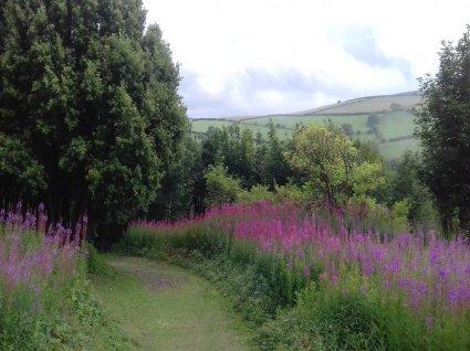 Hollerday Hill Lynton