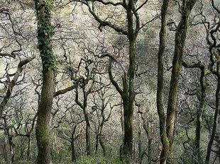 Winter woods at Watersmeet