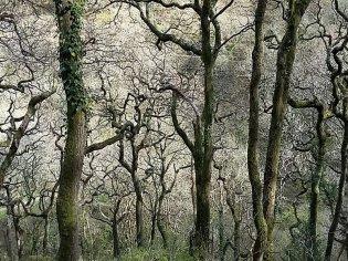 Woods at Watersmeet